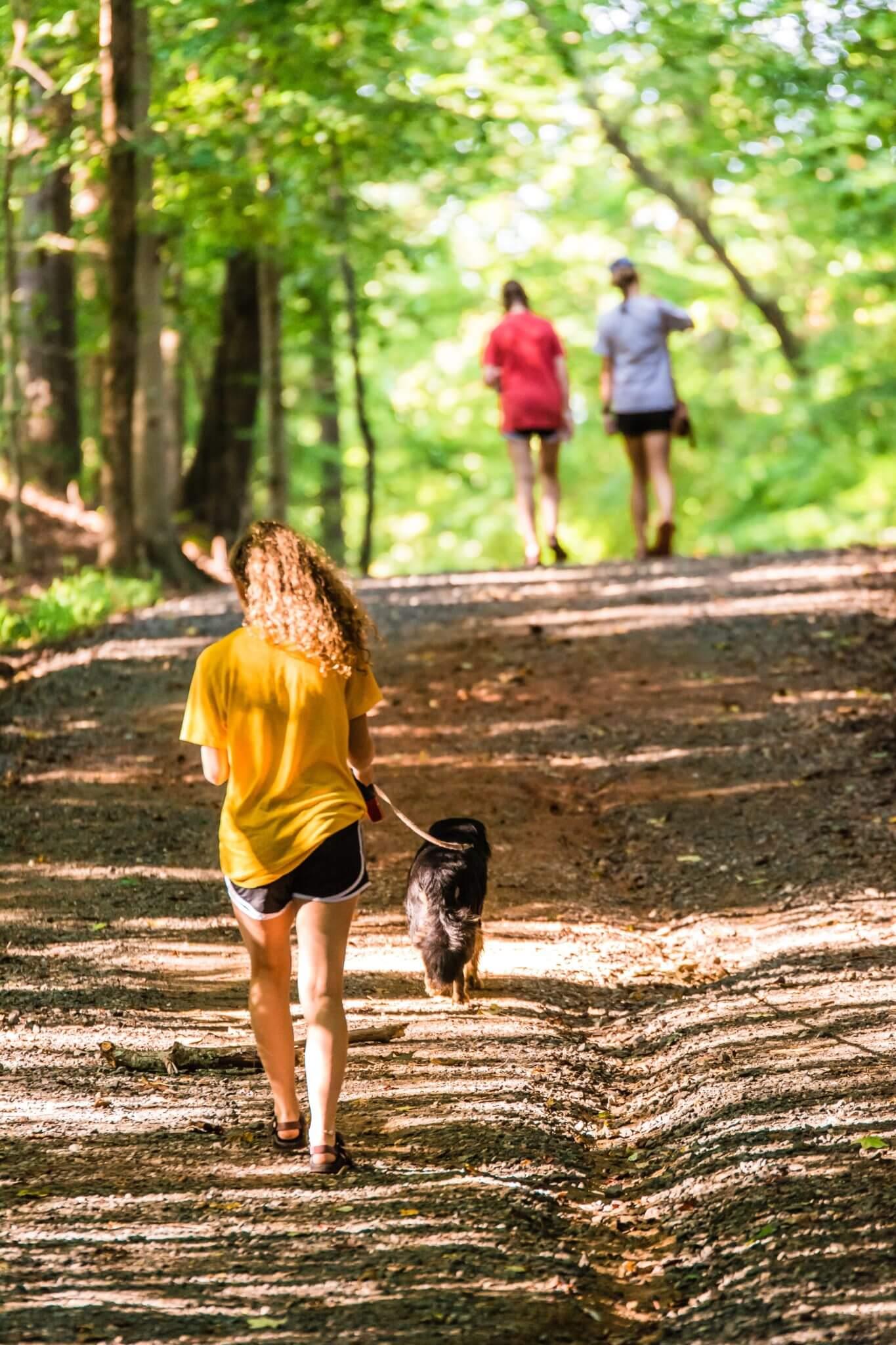 active-dog-walking-enjoyment-1504187