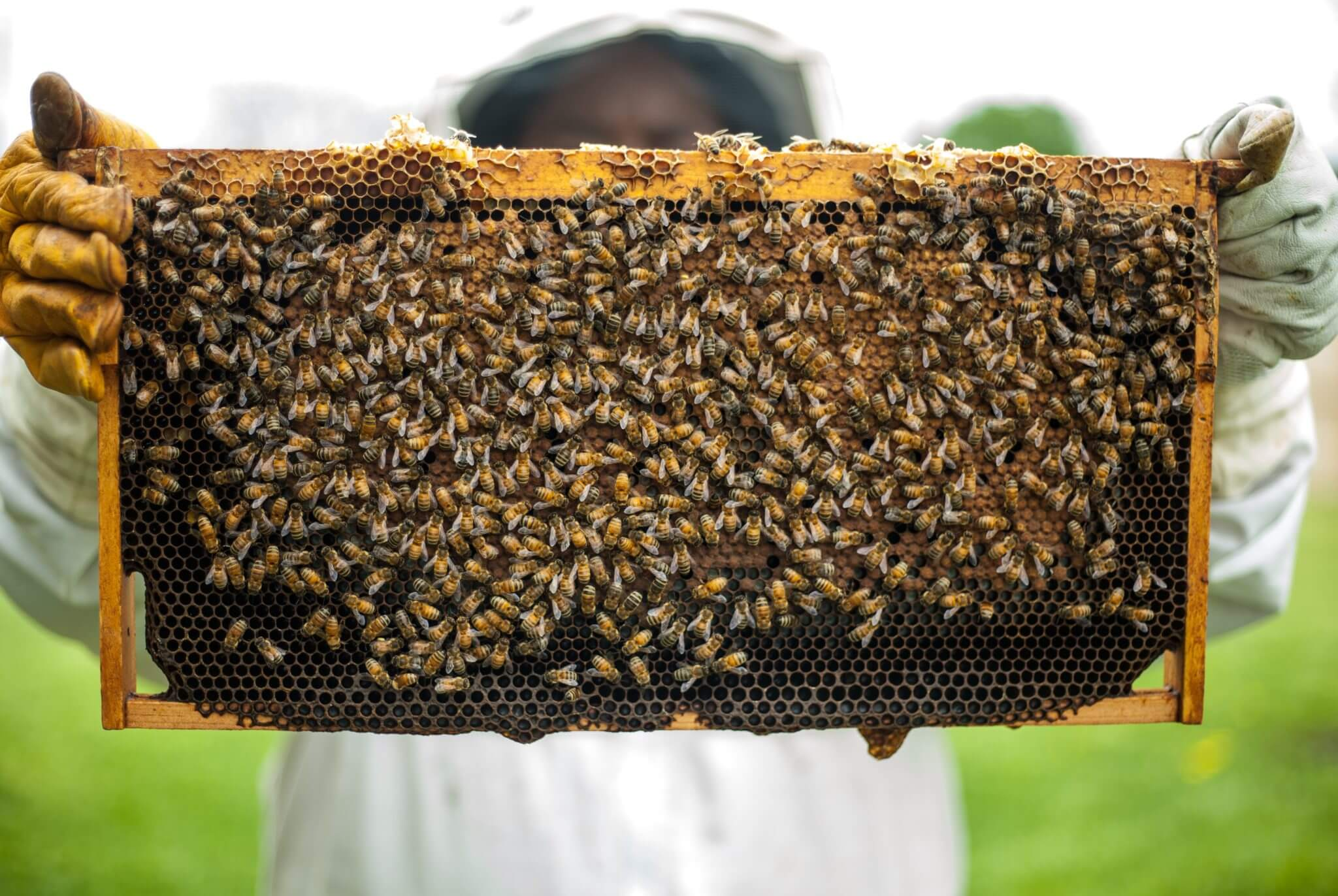 agriculture-apiary-beehive-1406954
