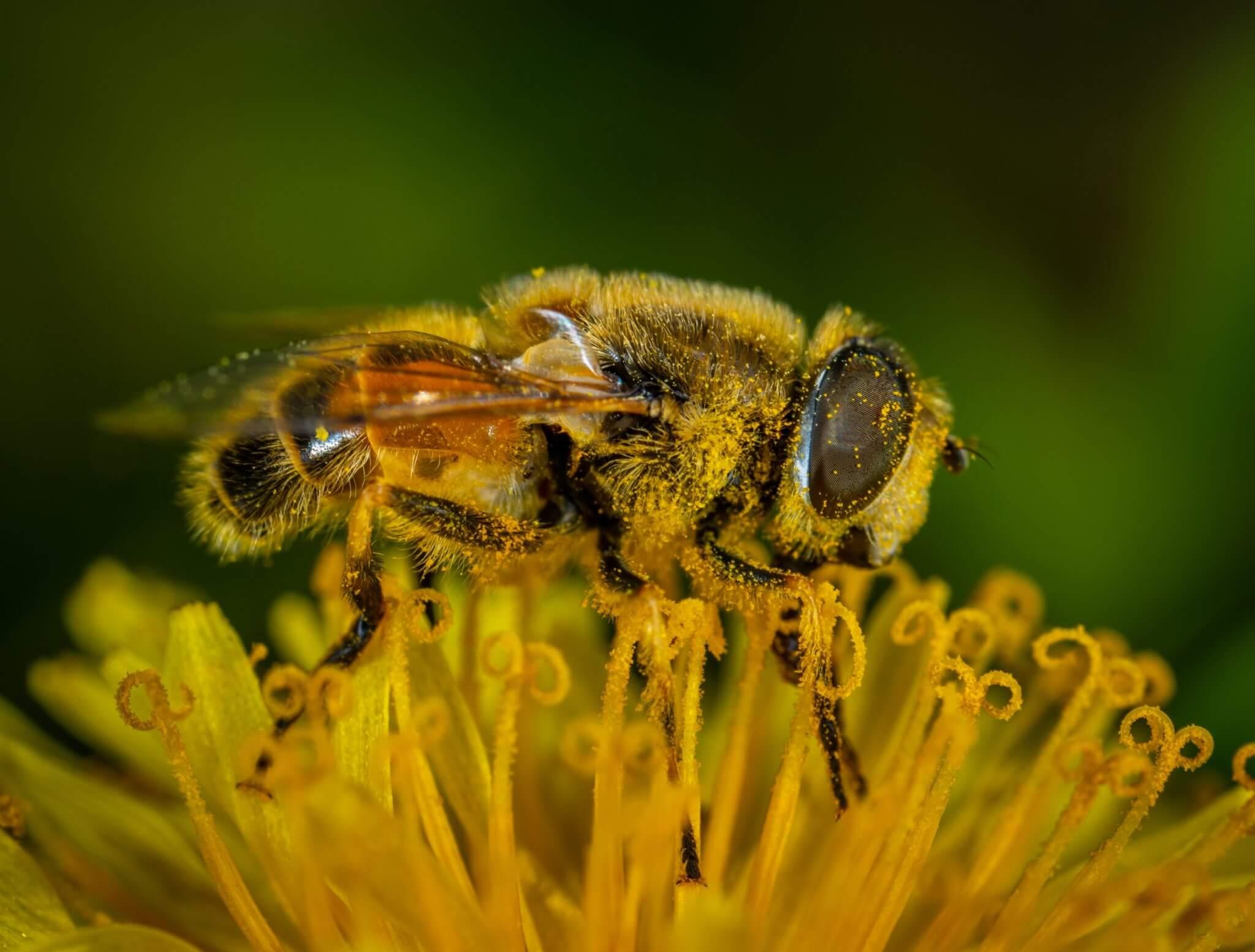 animal-bee-bumblebee-1101191