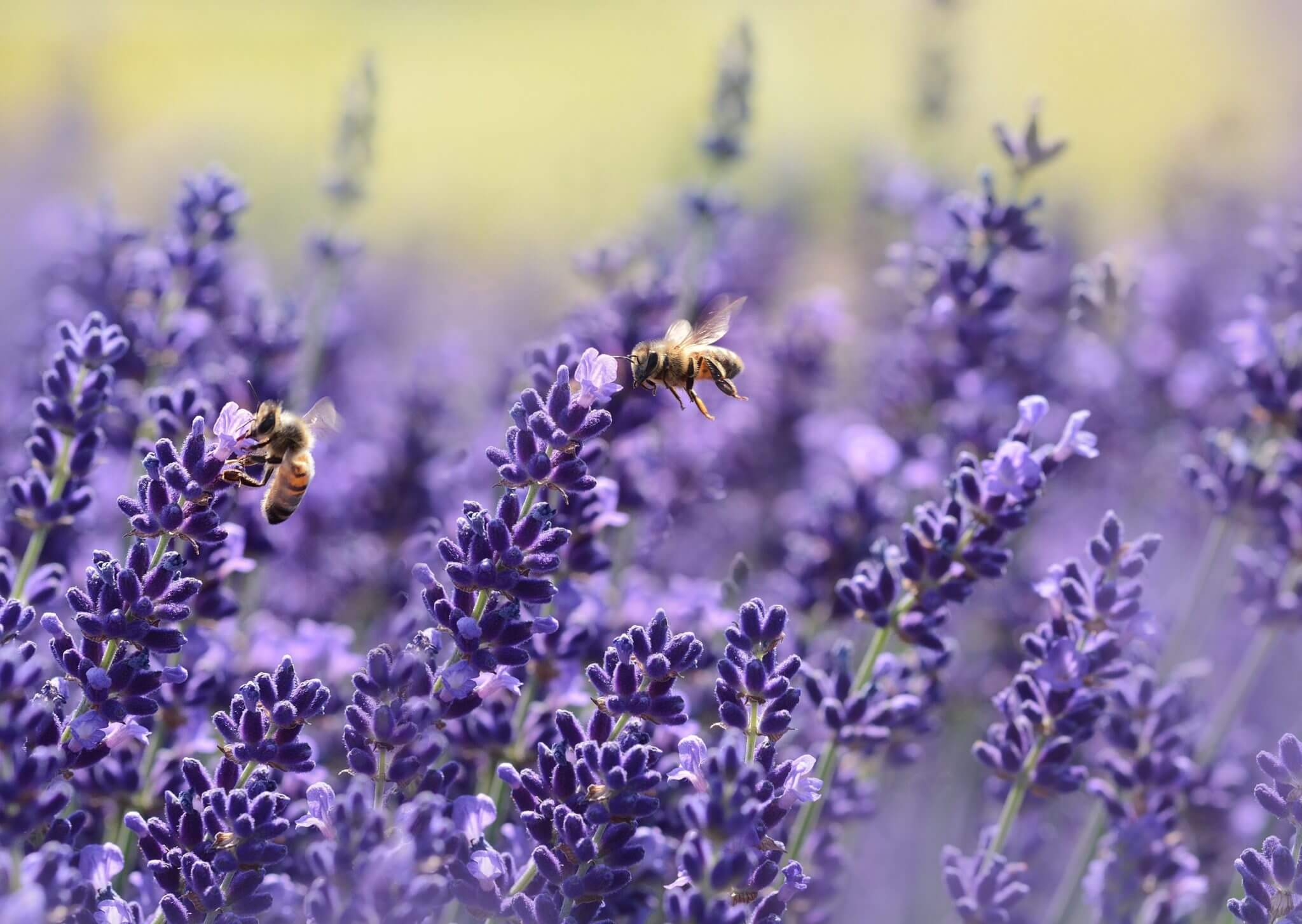 bees-bloom-blossom-164470