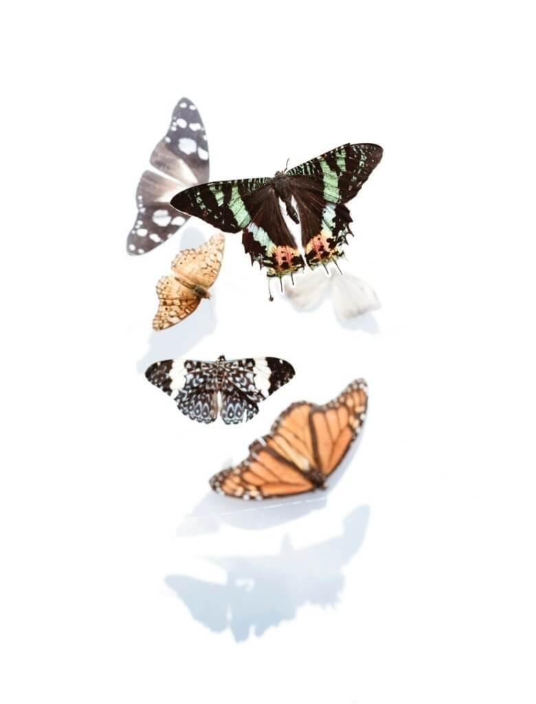 Butterfly hug
