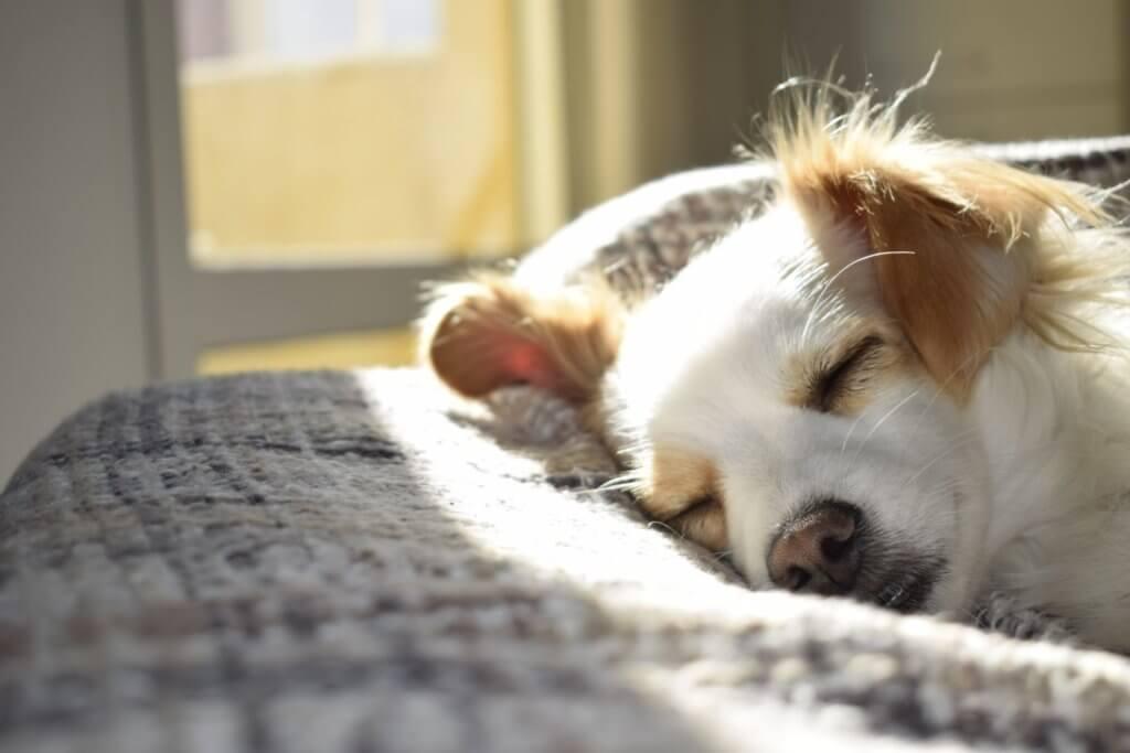 Doggo sleeping in the sun