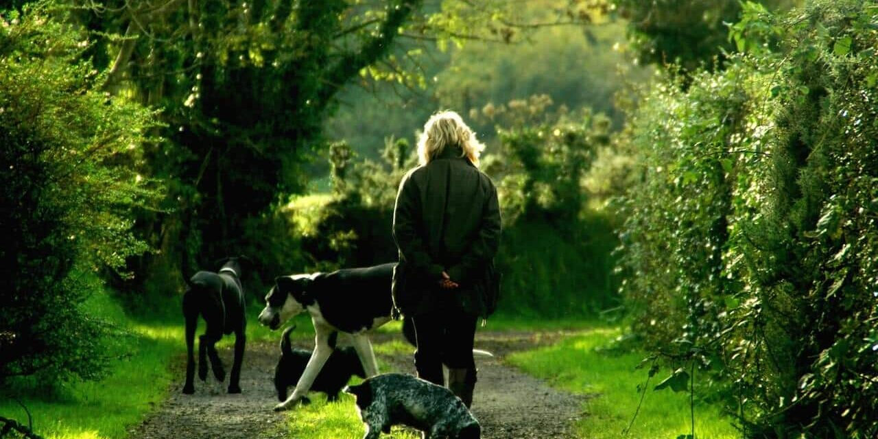 animals-dogs-lady-62379